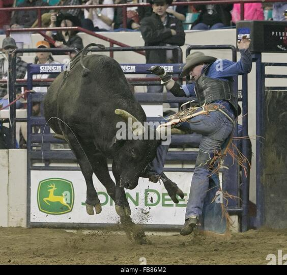 Denver, Colorado, USA. 11th Jan, 2016. Bullrider SHAWN PROCTOR, of Tooele, UT gets a horn on his leg from Bull CRAZY - Stock Image