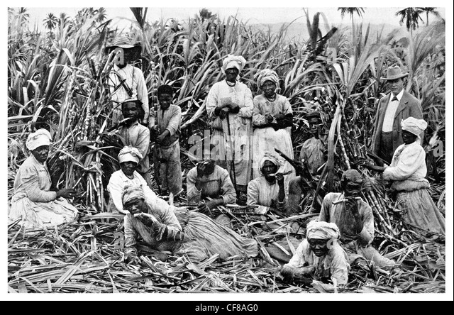 morant bay muslim 4gk005 campaigning and citizenship  it is estimated that 15% of the indentured labourers in in british guiana were muslim,  1865 morant bay rebellion in.