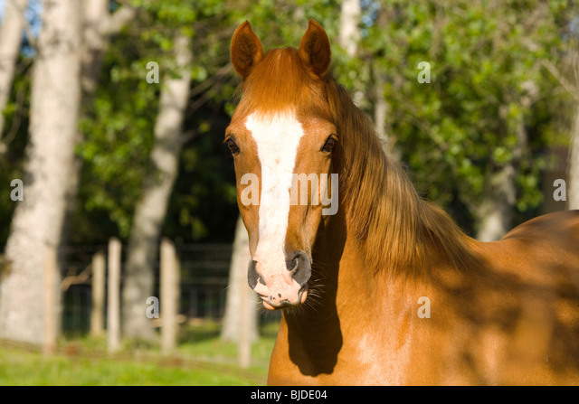 Portrait of a horse - Stock Image
