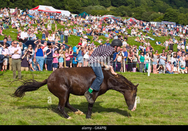 One of the last country shows in the UK to still feature rodeo riding where unbroken Welsh hill ponies are brought - Stock Image