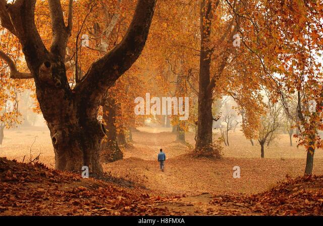 Srinagar, India. 11th Nov, 2016. Kashmiri Muslim boy walking in the nishat garden during Autumn season in Srinagar, - Stock Image