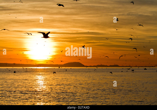 Sunrise, Isla Rasa, Gulf of California (Sea of Cortez), Baja California, Mexico, North America - Stock Image
