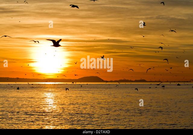 Sunrise, Isla Rasa, Gulf of California (Sea of Cortez), Baja California, Mexico, North America - Stock Image