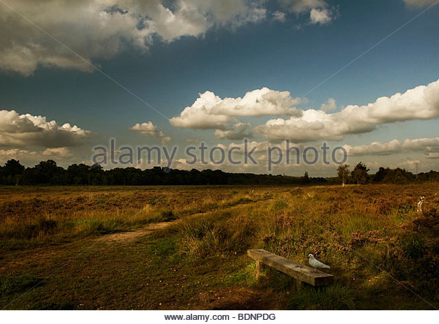 Landscape with dove in foreground. - Stock Image