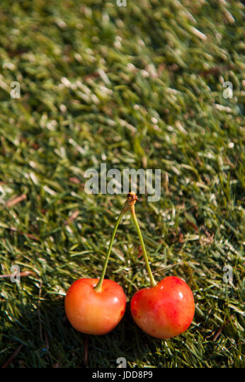 A pair of cherries on some grass - Stock Image