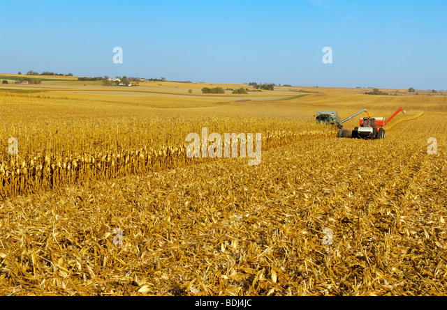 Agriculture - A combine harvests grain corn in Autumn and augers the corn into a grain cart on-the-go / Iowa, USA. - Stock-Bilder