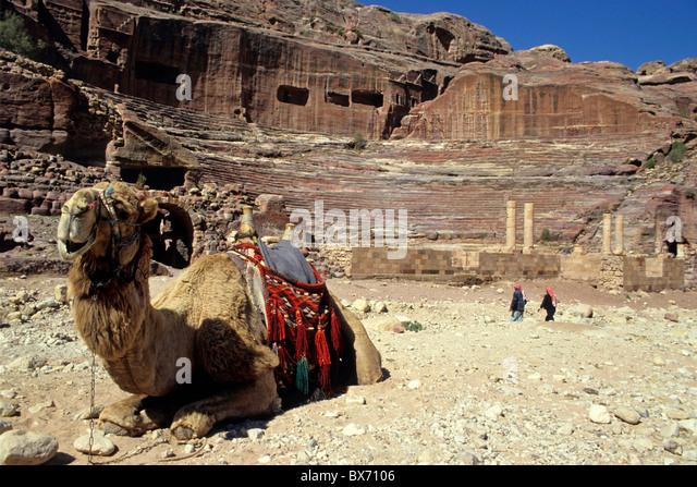 Camel, Petra, Jordan. - Stock Image