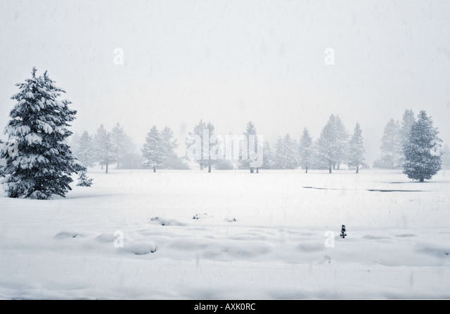 snowing winter trees cold white season Christmas nature forest ground plants moist travel vacation green sky frozen - Stock Image