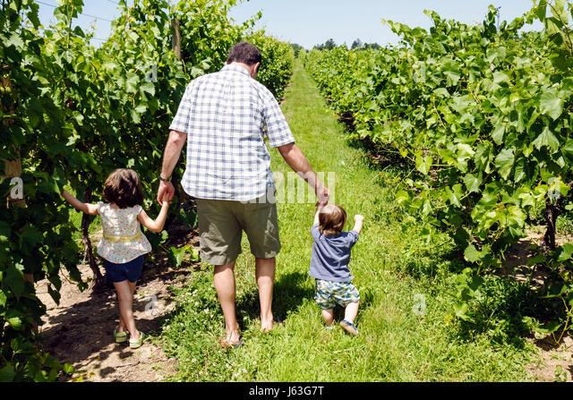 Michigan Berrien Springs Domaine Berrien Cellars vineyard winery grapes farm agriculture estate bottled wine viticulture - Stock Image