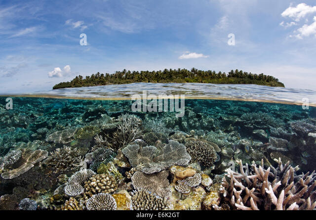 A Maldive island covered in palm trees and a coral reef overgrown with stone corals, fringing reef, reef flat, Indian - Stock Image