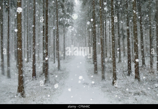 Winter landscape, near Villingen-Schwenningen, Black Forest, Baden-Wurttemberg, Germany, Europe - Stock Image