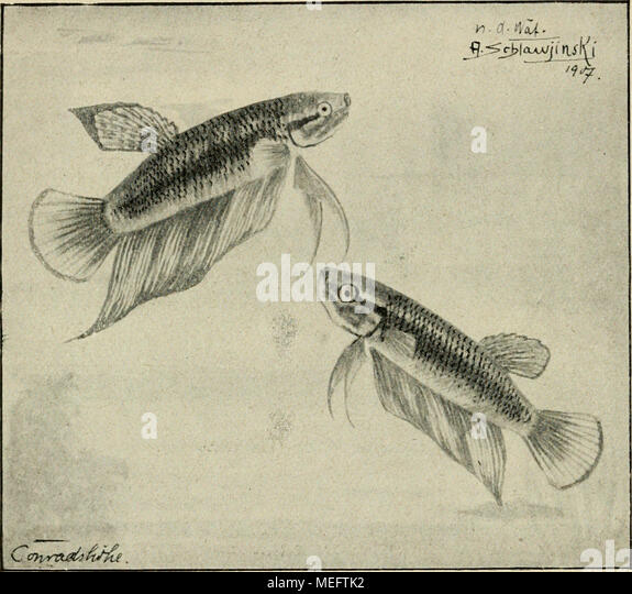 Fantastisch Färbung Blätter Fisch Galerie - Framing Malvorlagen ...