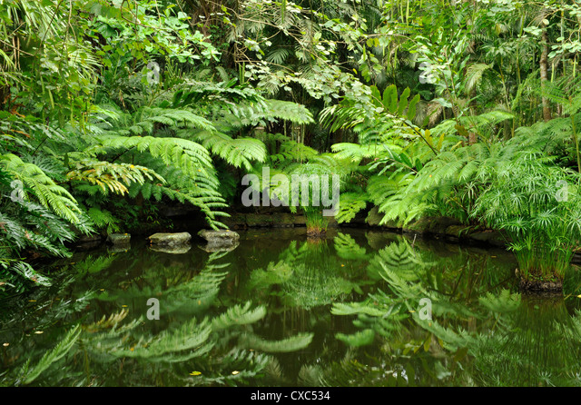 Tree ferns in the gardens of the Farm at San Benito, Lippa Batangas, Philippines, Southeast Asia, Asia - Stock Image
