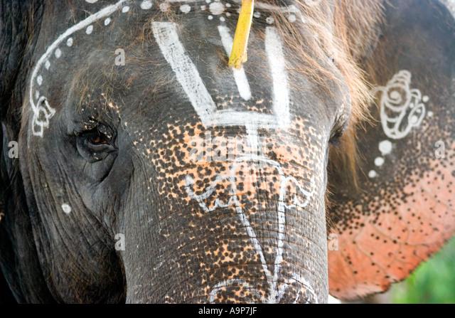 Sai Gita, Sathya Sai Baba's elephant , Puttaparthi, Andhra Pradesh, India - Stock Image