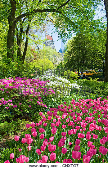 Central Park in spring season. - Stock Image