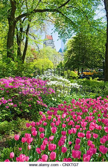 Central Park, New York City in spring season. - Stock Image