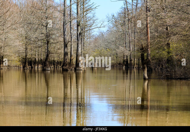 Bald cypress trees stock photos bald cypress trees stock for Lake istokpoga fish camps