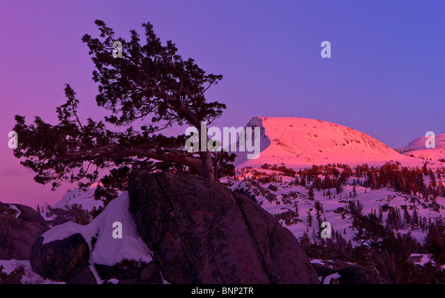 Alpenglow on peak, Carson Pass, Mokelumne Wilderness, California, USA. - Stock Image