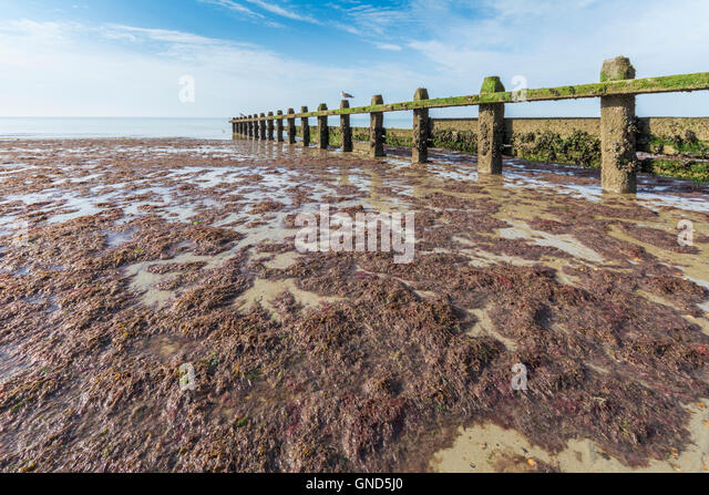 Beach at low tide by a wooden groin covered in seaweed. - Stock Image