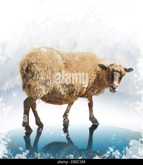 Watercolor Digital Painting Of  Walking Sheep - Stock-Bilder
