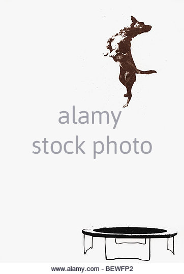 Dog jumping on trampoline - Stock Image