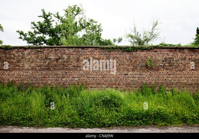 Brick wall and plants - Stock Image