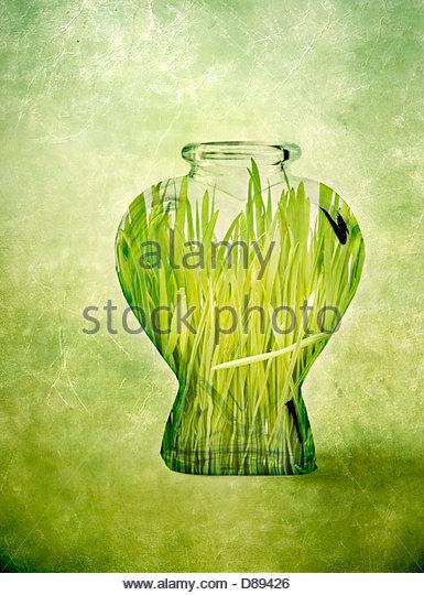 Digital manipulation of green grass inside a glass bottle - Stock-Bilder