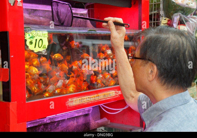Hong Kong China Kowloon Prince Edward Tung Choi Street Goldfish Market Asian man looking tank selecting sale display - Stock Image