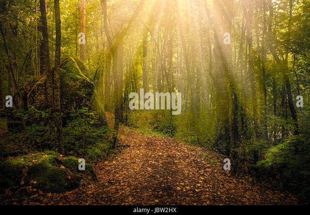 Idyllic path with sun flares at autumn morning in national park Finland - Stock Image