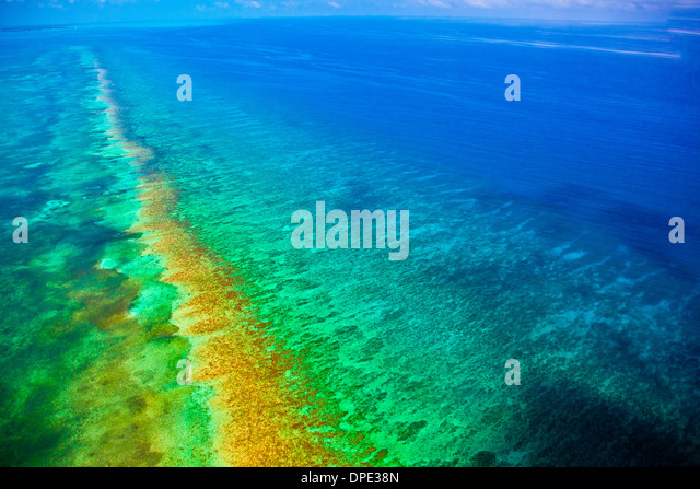 Reef detail Belize Caribbean Sea Meso American Reef Reserve Lighthouse Reef Atoll Aerial view - Stock Image