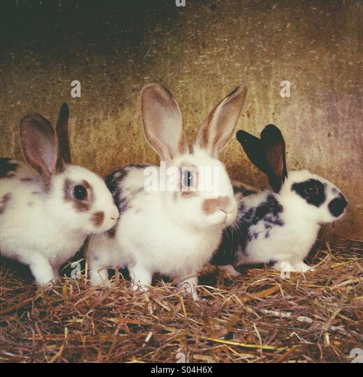 Young rabbits in cage - Stock Image