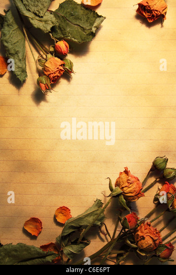 Blank sheet of paper, framed dried flowers - Stock Image