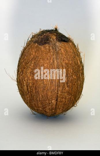 Whole Coconut on white background. - Stock Image