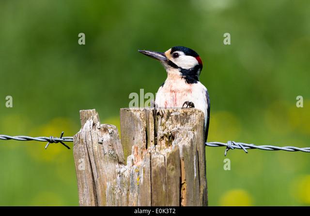 Claws Bird Close Up Stock Photos & Claws Bird Close Up ...