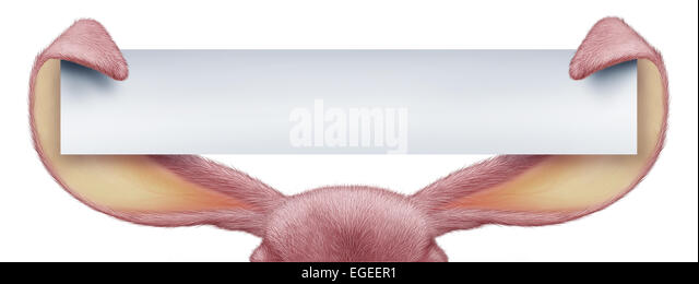 Easter rabbit horizontal sign as pink ears holding a long banner card with detailed textured realistic fur as a - Stock Image