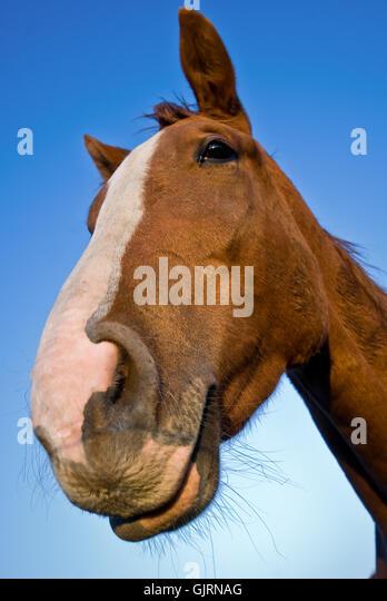 Pet Horse Stock Photos & Pet Horse Stock Images - Alamy
