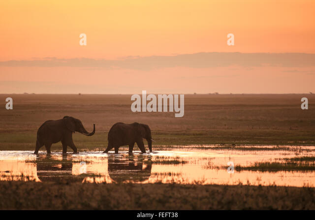 Two elephants in sunset - Stock-Bilder