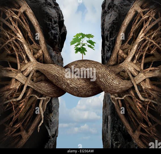 Unity growth concept and bridge the gap business symbol as two tree roots on a high steep cliff connecting and merging - Stock-Bilder