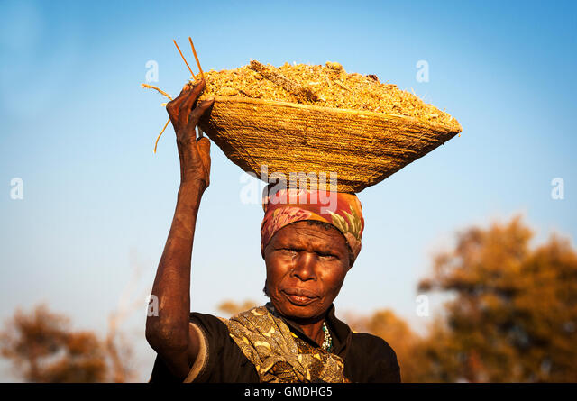 Caprivi Strip, Namibia - August 20, 2011: African woman balancing a basket with cereals in her head in Namibia, - Stock-Bilder