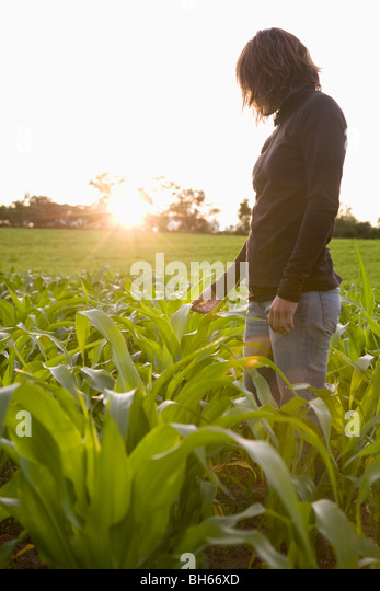 Woman standing amongst new corn crop - Stock Image
