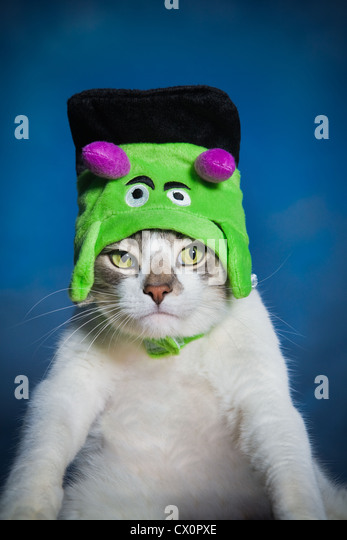 Portrait of cat wearing Frankenstein Halloween costume - Stock Image