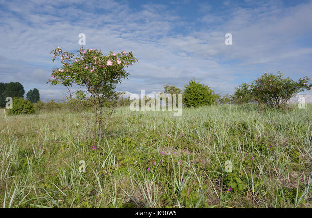 Landscape on Manija island. Manilaid Estonia 9th July 2017 - Stock Image