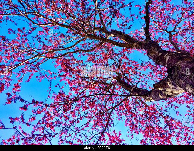 Spring Tree - Stock Image