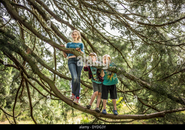 Two brothers and their sister climb trees in the forest. - Stock Image