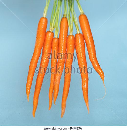 Organic carrots hanging - Stock-Bilder