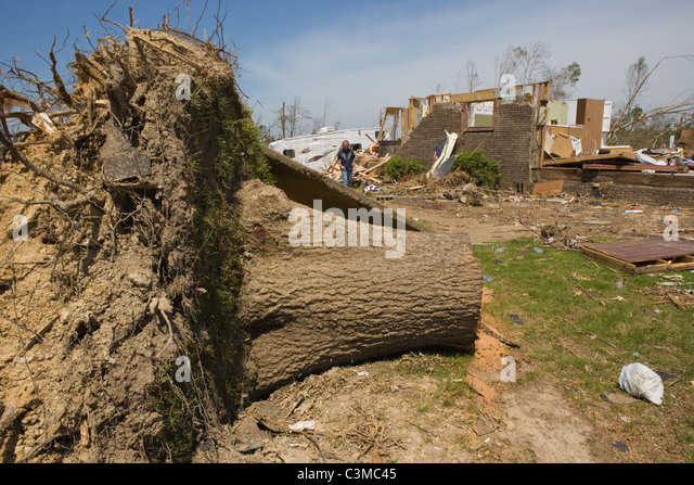 Large tree uprooted in Tuscaloosa Alabama after Tornado, May 2011 - Stock Image