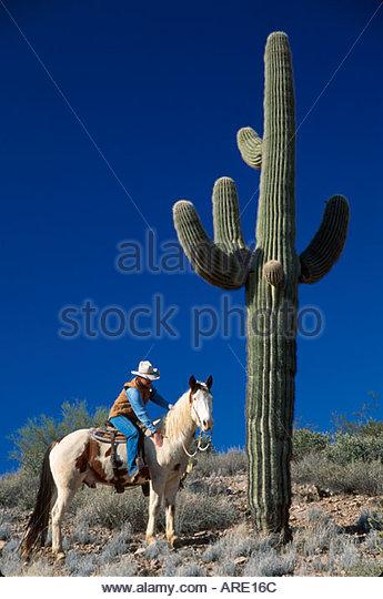 Arizona Sonora Desert Wickenburg Rancho de Los Caballeros Resort wrangler saguaro cactus - Stock Image