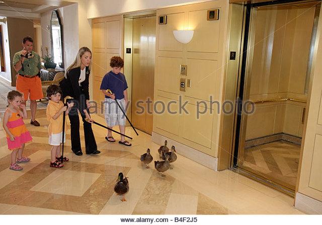 Orlando Florida International Drive The Peabody Orlando hotel Duck March woman man father parent girl boy boys children - Stock Image