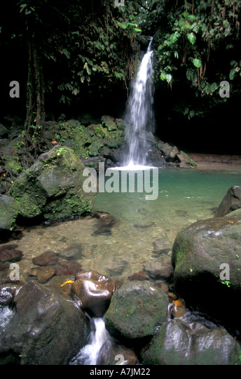 Dominica Emerald Pool famous rainforest landmark destination popular cruise excursion tourist attraction - Stock Image