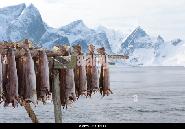 Skrei stock photos skrei stock images alamy for Salted cod fish near me